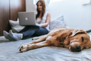 Solo and Smart 5 steps to creating a highly profitable pet care business